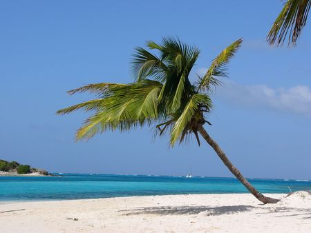 2550114 - palm on the tropical beach